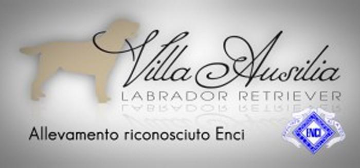 allevamento-villa-ausilia-ilmiocane-0.jpg
