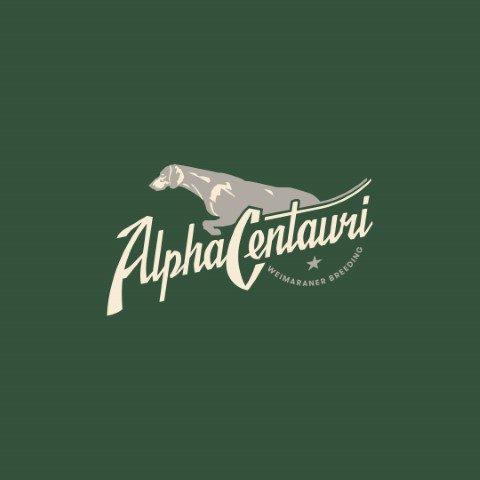 alpha-centauri-allevamento-di-weimaraner.jpg