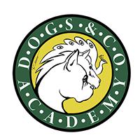ASILO_DIURNO_PER_CANI_ROMA_Dogs_&_Co._Academy