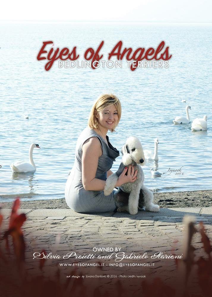 Allevamento_Bedlington_Terrier_Eyes_Of_Angel.JPG
