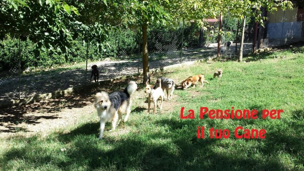 Pensione-per-Cani-Lazio.JPG