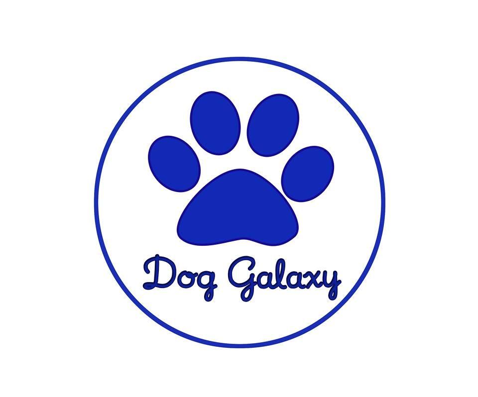 DOG_GALAXY_Allevamento_Border_Collie_e_Grande_Bovaro_Svizzero.jpg