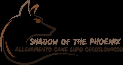 allevamento-shadow-of-the-phoenix