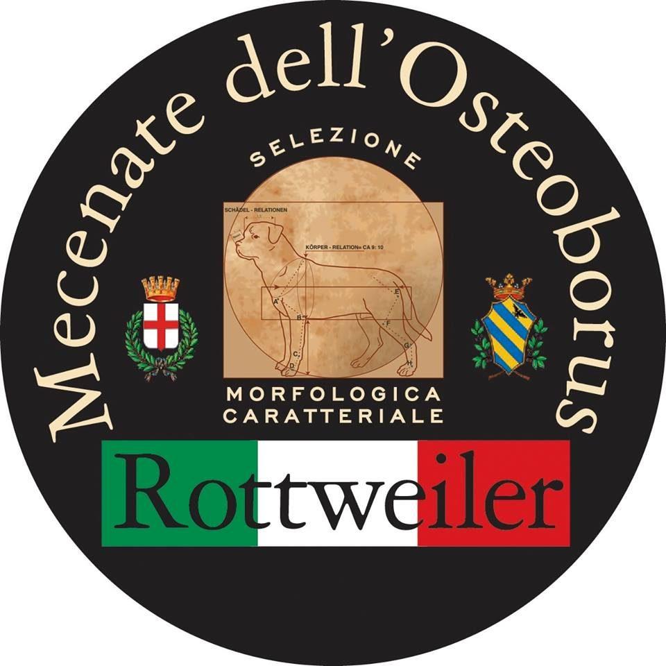 Mecenate_dell'Osteoborus_Allevamento_Rottweiler.jpg