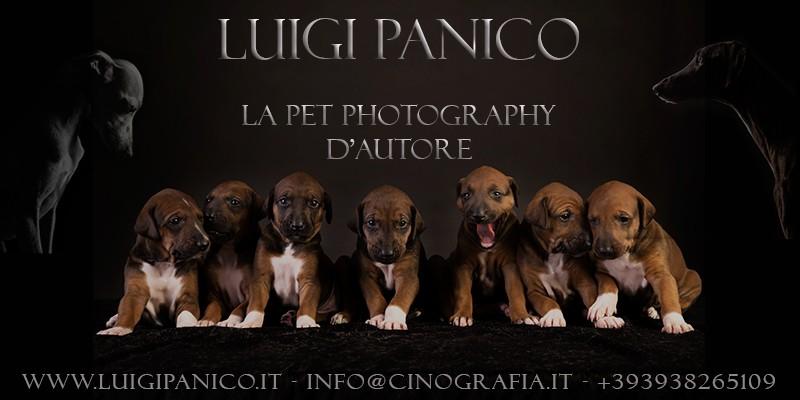 Logo-Luigi-Panico-Photography.jpg