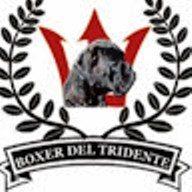 Allevamento_Boxer_Del_Tridente.jpg