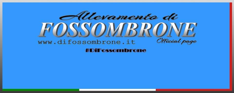 Allevamento_di_Fossombrone.jpg