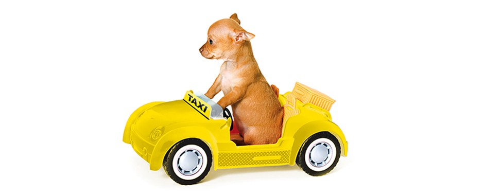 slide Il dog taxi .jpg