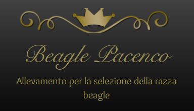 Allevamento_Beagle_Pacenco.png