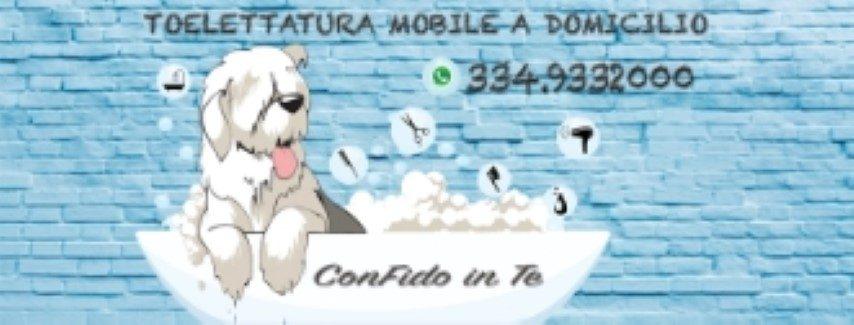 toelettatura-mobile-treviso-confido-in-te.jpg