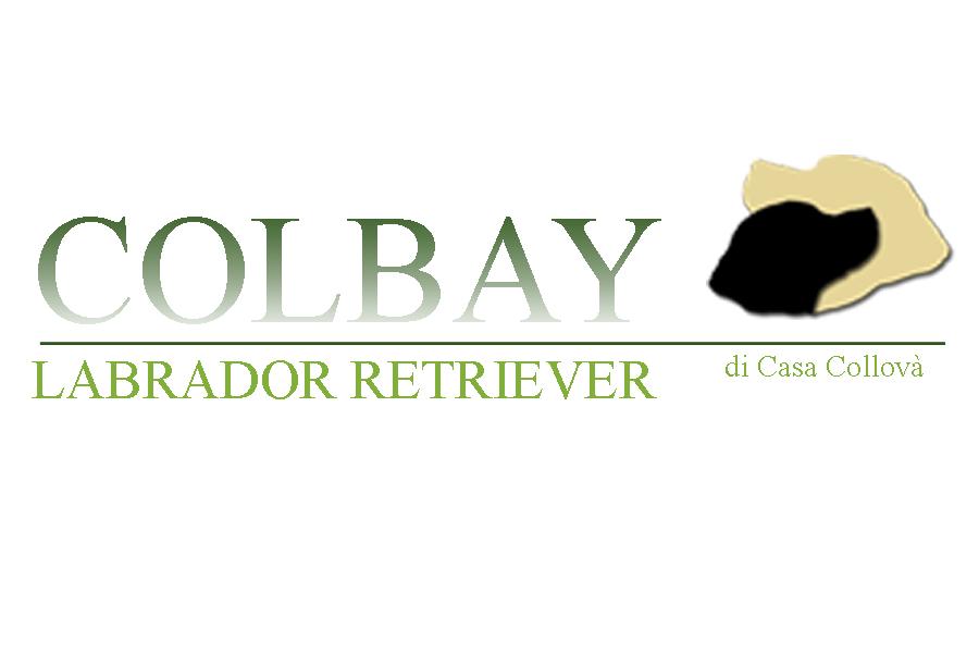 Allevamento_Labrador_Retriever_Colbay_di_Casa_Collovà.jpg