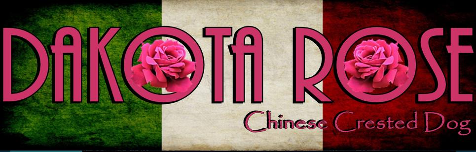 Allevamento_Chinese_Crested_Dog_DAKOTA_ROSE.jpg