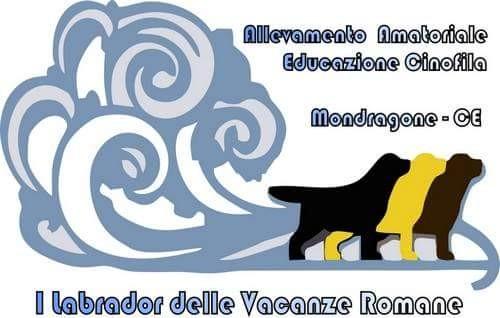 Allevamento-labrador-delle vacanze romane.jpg