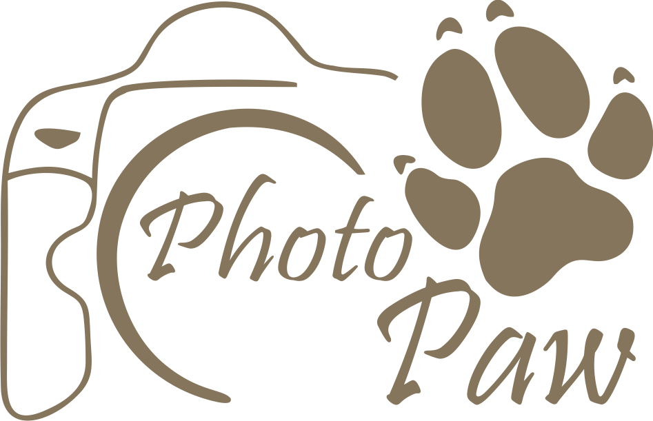 PhotoPawbrown.png