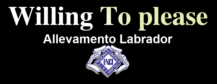 Allevamento_Labrador_Retrievers_Willing_To_Please.png