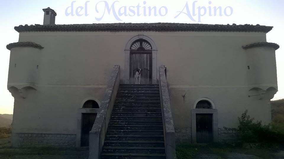 Allevamento_Cane_San_Bernardo_del_MASTINO_ALPINO.jpg