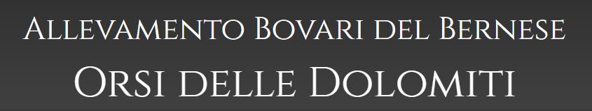 Allevamento-Bovari-del-Bernese-ORSI-DELLE-DOLOMITI.png