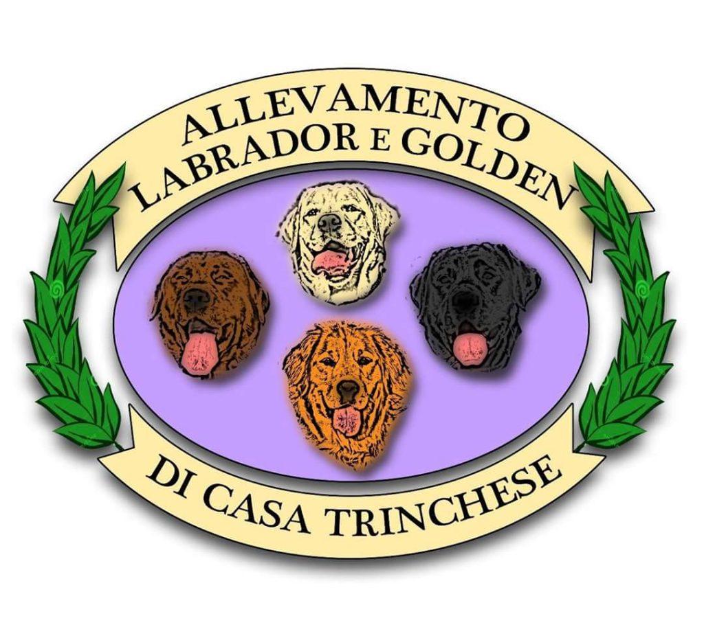 Allevamento-Labrador-e-Golden-di-Casa-Trinchese.jpg