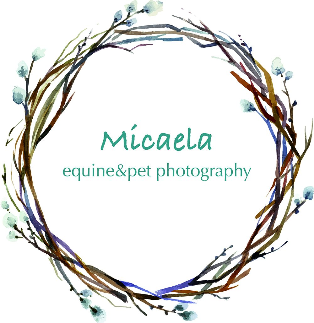 Micaela_equine-pet_photography