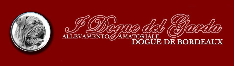 DEI DOGUE_DEL_GARDA_Allevamento_Dogue_de_Bordeaux.jpg