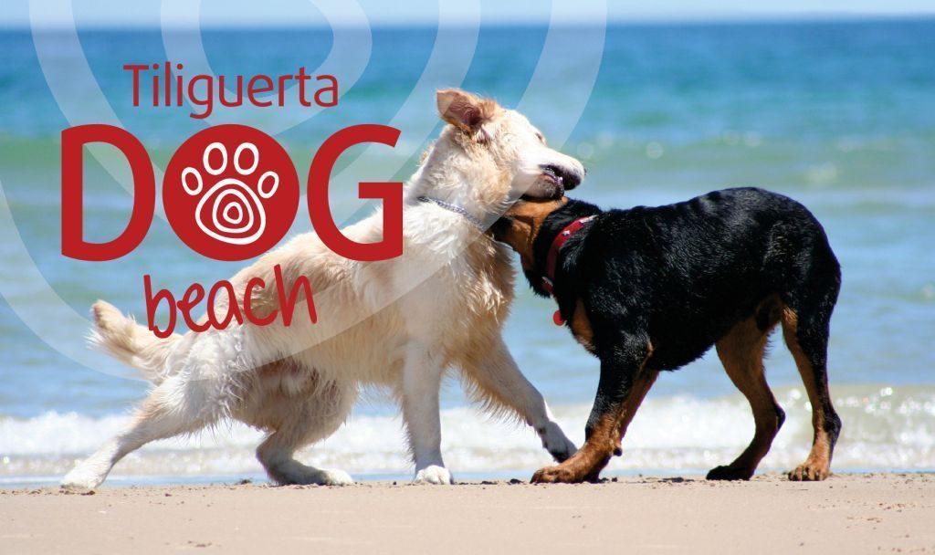 Tiliguerta_Dog_Beach_1.jpg