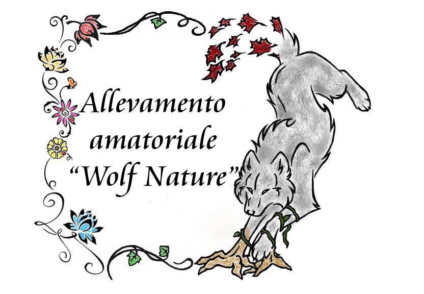 Wolf-Nature-Allevamento-Cane-Lupo-Cecoslovacco-Palermo.jpg