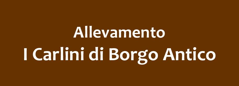 Allevamento_I_CARLINI_di_BORGO_ANTICO.jpg