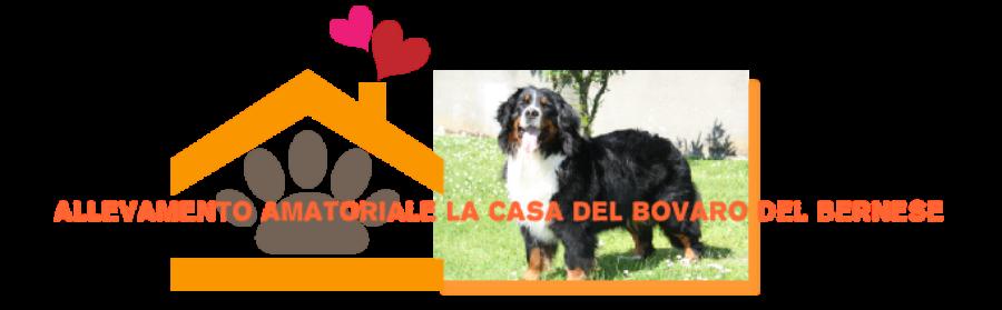 Allevamento_La_Casa_del_Bovaro_del_Bernese.png