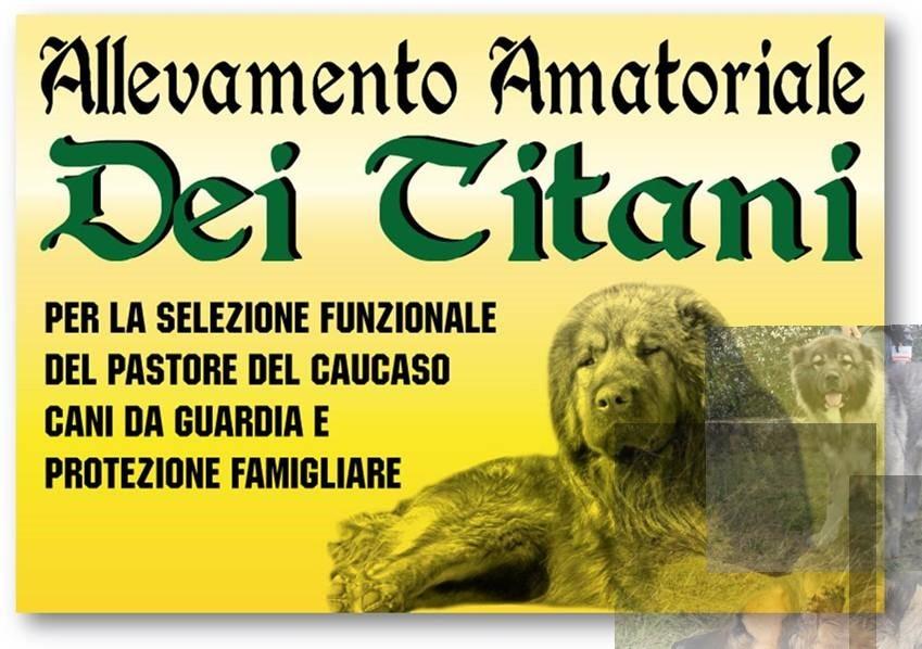 DEI-TITANI-ALLEVAMENTO-PASTORE-DEL-CAUCASO.jpg