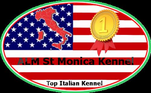 ALM_St_Monica_Kennel_Allevamento_Akita_Americano_e_Pastore_Australiano.png