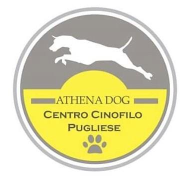 Athena_Dog_Asilo_per_cani_Bari.jpg