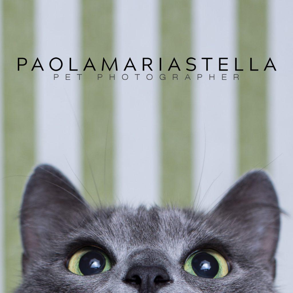 paola-stella-pet-photographer.jpg