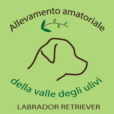 Allevamento_Labrador_DELLA_VALLE_DEGLI_ULIVI.jpg