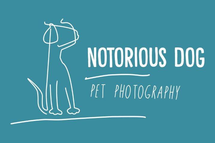 notorious-dog-pet-photography.jpg