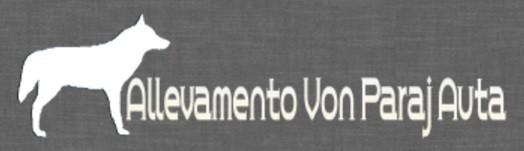 Allevamento-Cane-Lupo-Cecoslovacco-e-Pastore-Tedesco-VON-PARAJ-AUTA.jpg