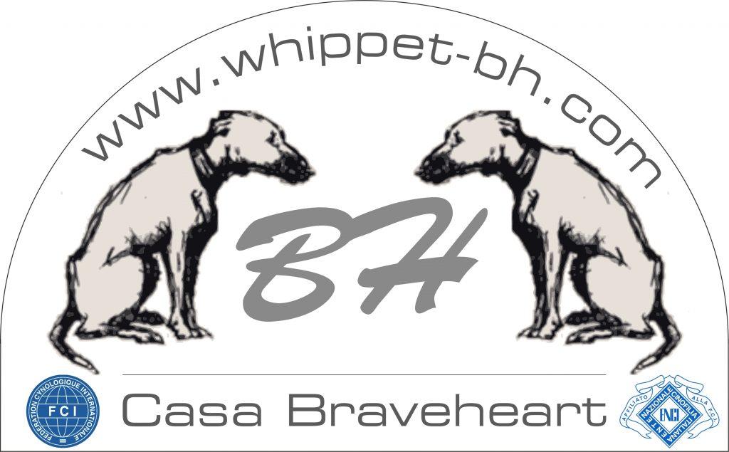 CASA-BRAVEHEART-Allevamento-Whippet.jpg