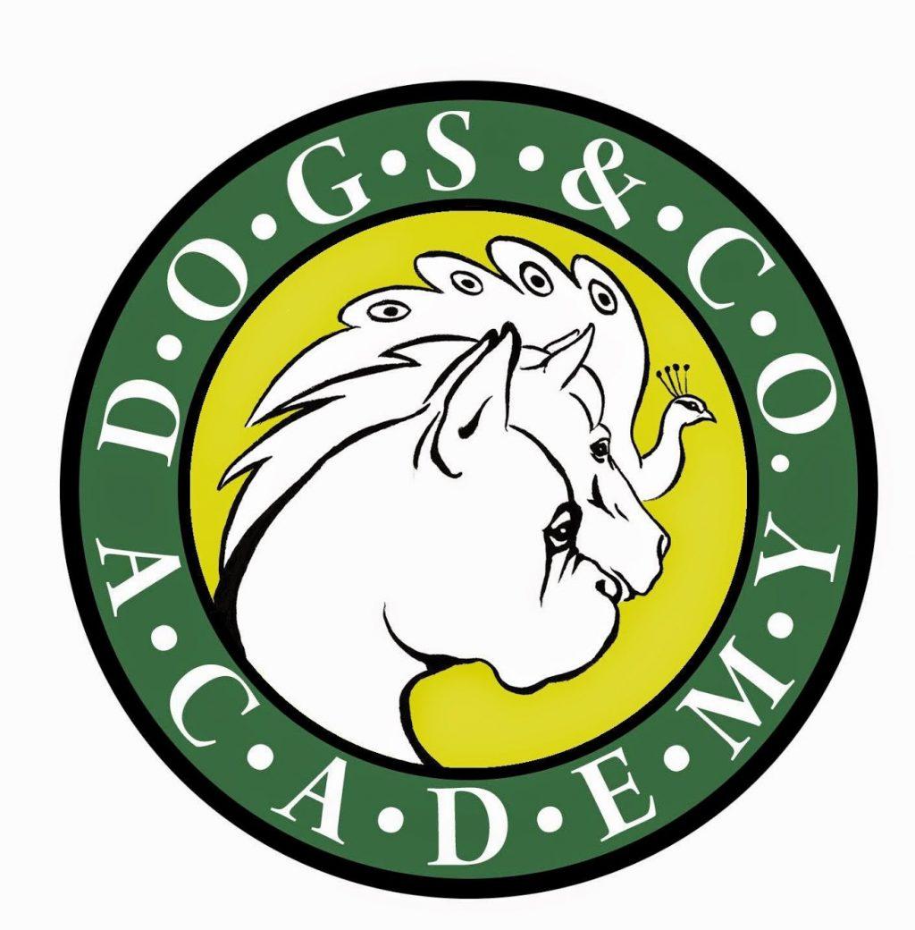 Dogs-&-CO.-Academy