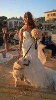 wedding_dog_sitter_parola_di_fido.jpg