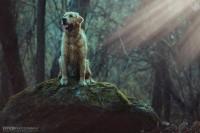 Federico-Barazzuol-Photography-3.JPG