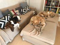 milano-dog-sitter-1.jpg