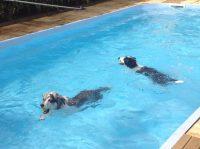 DOGS'_SPLASH_AND FUN_Centro_Cinofilo_e_Piscina_per_Cani_3.jpg