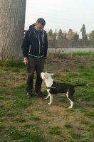 Dog_Trainer_Torino_1.jpeg
