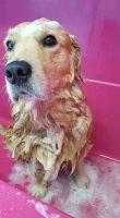 FONZY_SHOWER_DOG_Toelettatura_Segrate_2.jpg