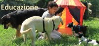 DOGSY_Asilo_per_Cani_e_Dog_Sitting_Venezia_4.JPG