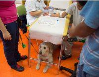 fridas-friends-onlus-interventi-assistiti-con-gli-animali-pet-therapy-2.jpg