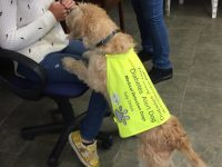 medical-detection-dogs-italy-2.jpg