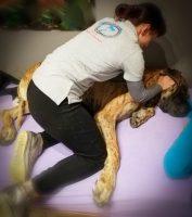 arianna-vigano-esperta-in-osteopatia-animale_1.jpeg