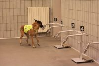 medical-detection-dogs-italy-3.jpg