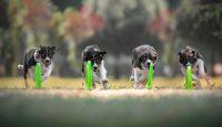frisbeescape-fe-frisbee-e-giochi-per-addestramento-del-cane-4.jpg
