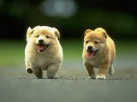 Martindog-Dog-Sitter-e-Pensione-per-Cani-Bari-2.jpg